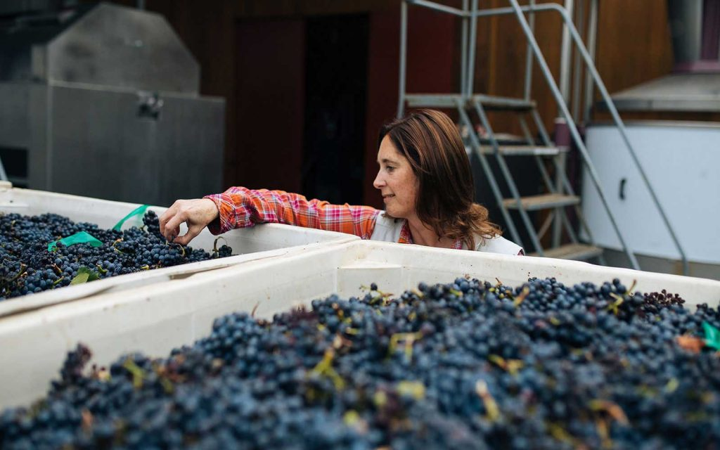 2/4: Winemaker Stephanie Jacobs looking at grapes as they come in for Harvest