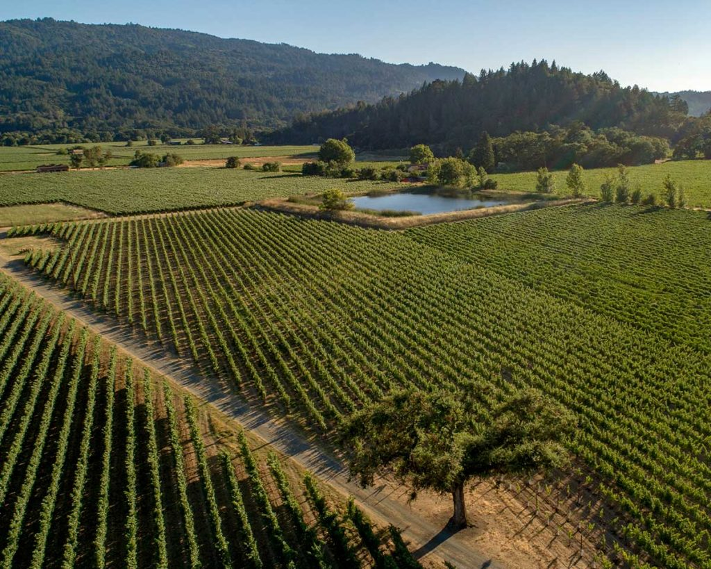Cakebread Cellars: Maple Lane Vineyard