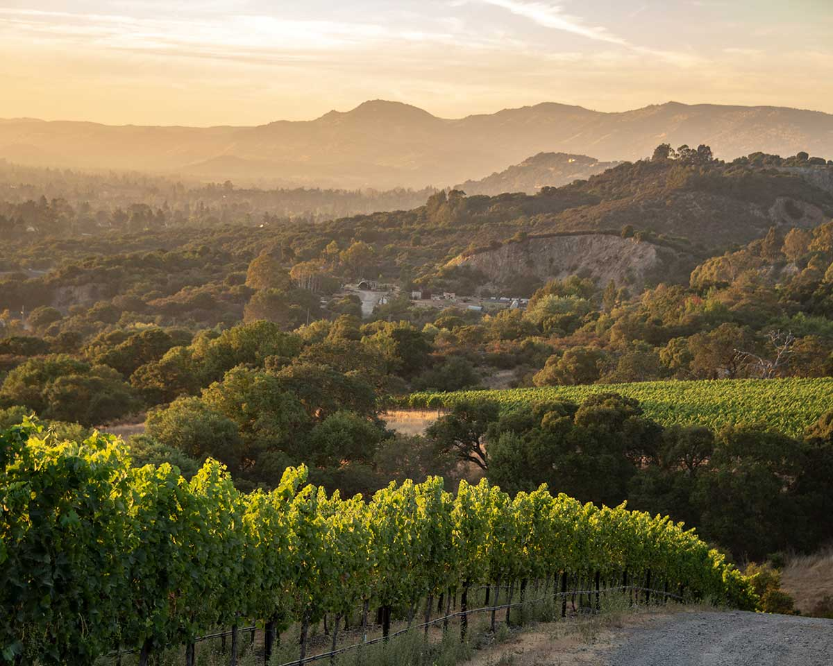 Cakebread Cellars: Sucol Ranches